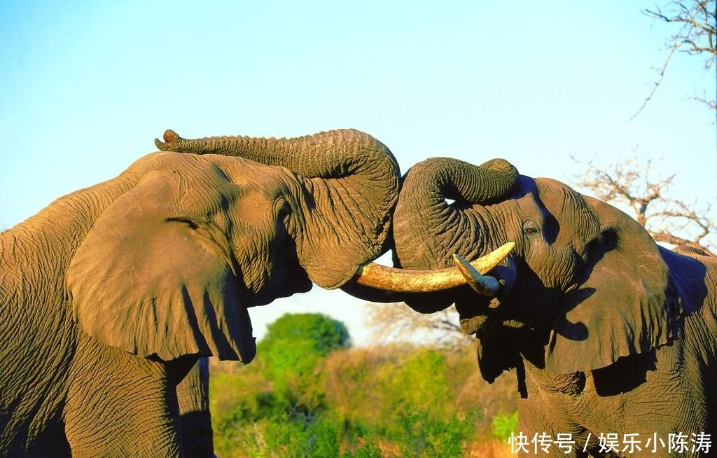 科学都无法解释,神秘大象