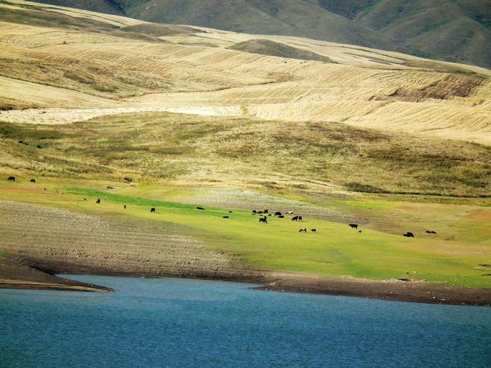 是我国新疆塔城地区的