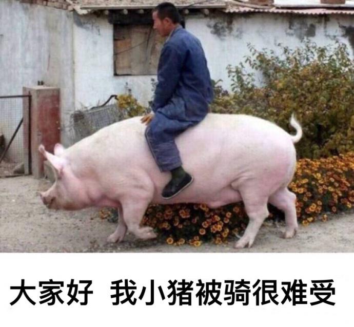 我小猪被骑很难受搞笑表情包