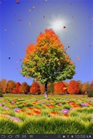 秋天的树木壁纸_360手机助手