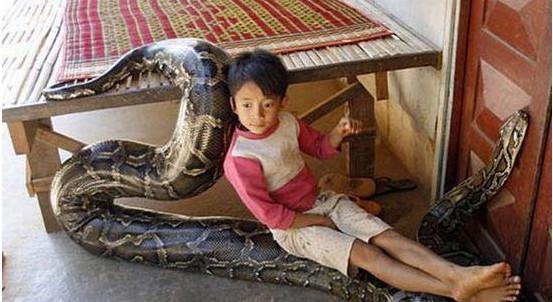男孩与大蛇六年间如影随形 父母不担心 - 周公乐 - xinhua8848 的博客
