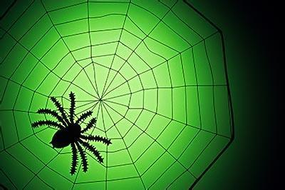 蜘蛛结网的全过程 _汇潮装饰网