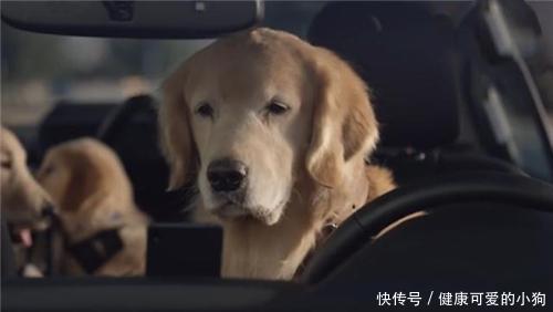 如何养狗 系列7 狗宝宝坐车也有讲究哦
