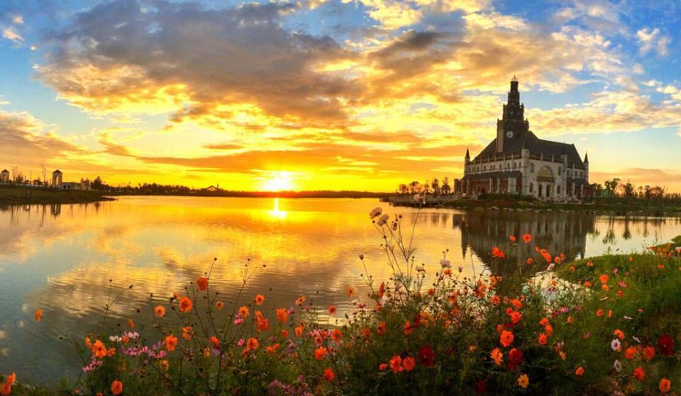 异国风情-美丽的大丰荷兰花海