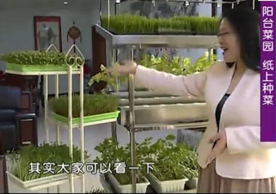 神奇!她用一张白纸在阳台种菜,供全家人吃!快来学! - 周公乐 - xinhua8848 的博客