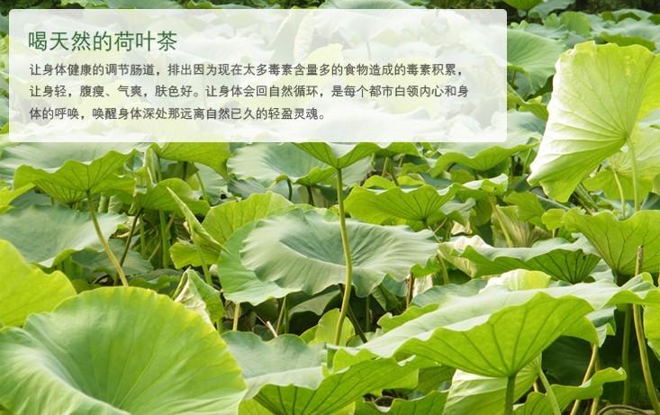荷叶茶是如何制作的           b,荷叶茶的制作步骤一杀青:将叶片