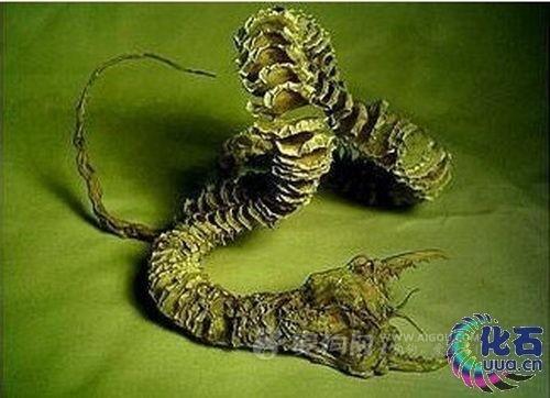 他因此联想到中世纪欧洲的火蜥蜴迷案,当时人们以为这种火蜥蜴有剧毒
