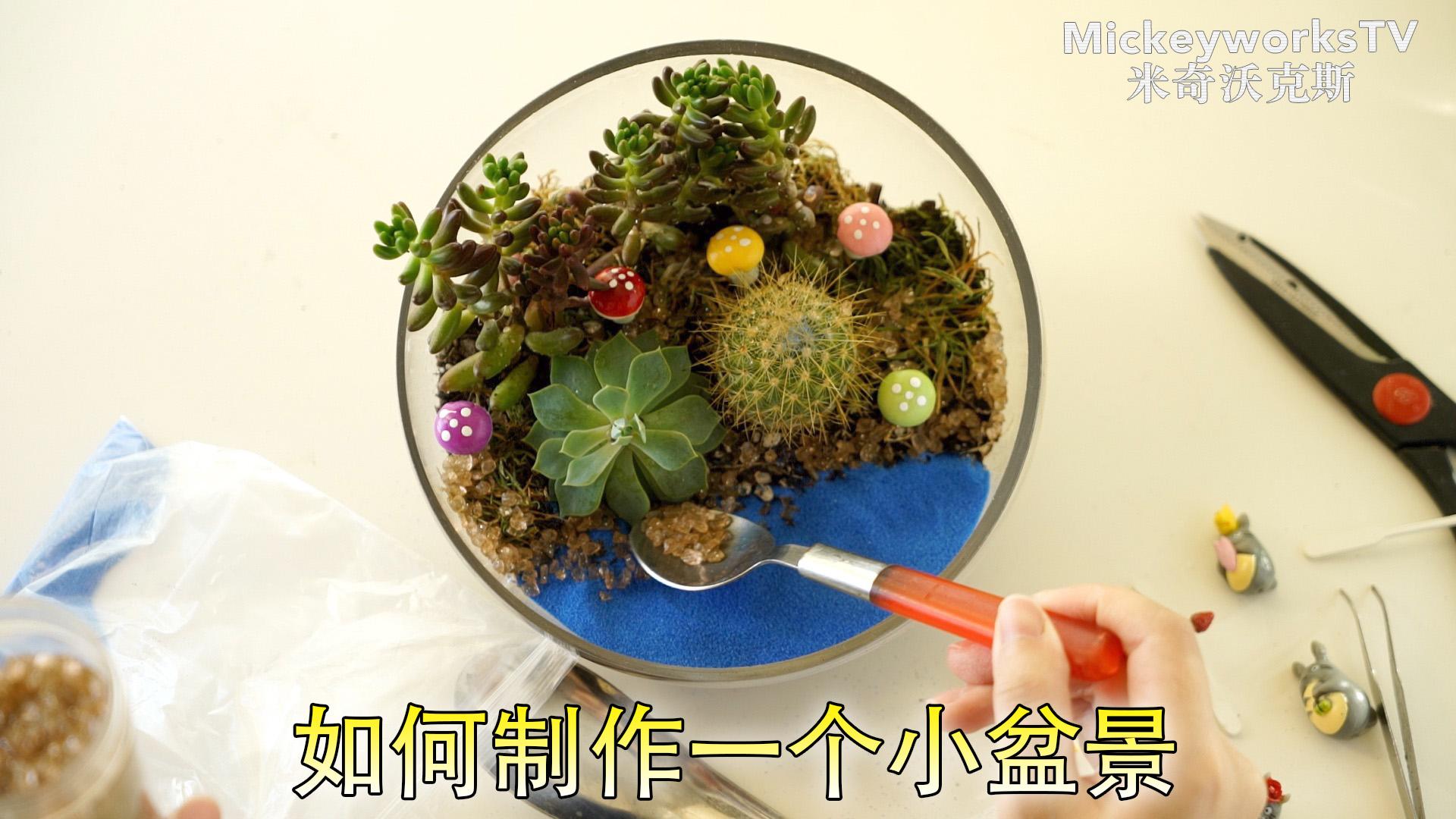 教你如何制作一个简单精致的小盆栽