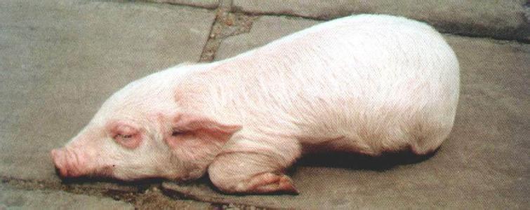 病解的动物图片