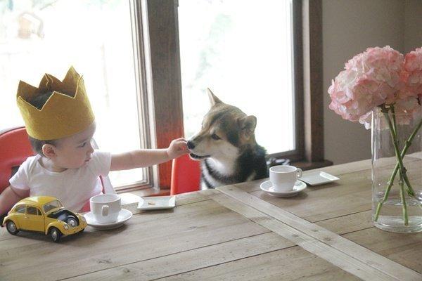 """""""一茶""""和""""Maru的幸福生活"""