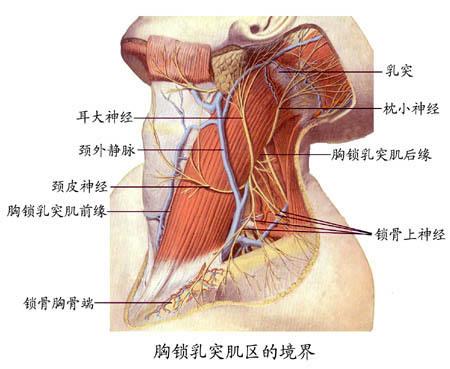 动植物解剖结构图