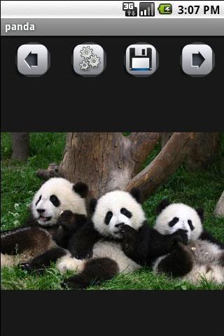 壁纸 大熊猫 动物 320_480 竖版 竖屏 手机