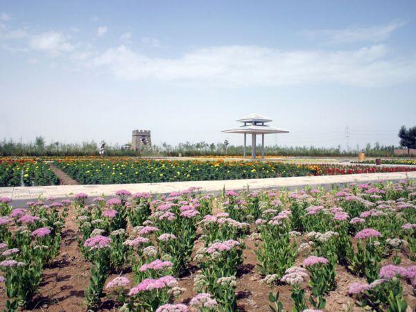 乌海市植物园