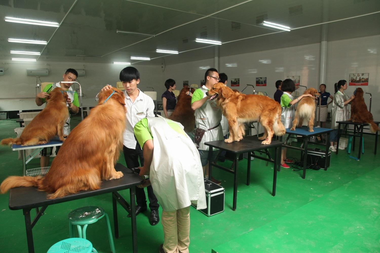 宠物护理步骤梳理