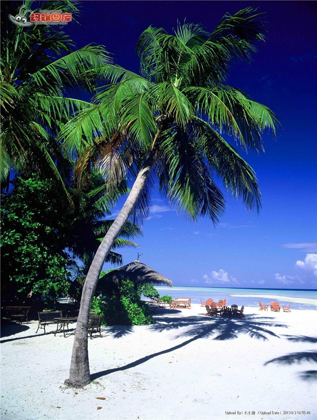 2k椰子树风景竖屏壁纸