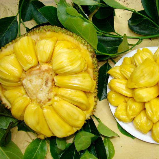 菠萝蜜树是什么样子的呢