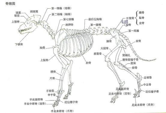 骨骼结构图