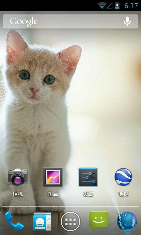 桌面壁纸-可爱萌猫