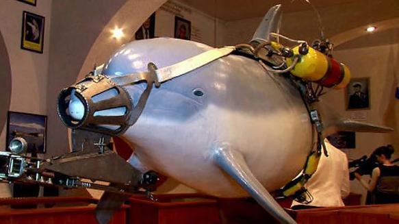 英媒:俄海军首次用白鲸在北极执行军事任务 - 钟儿丫 - 响铃垭人