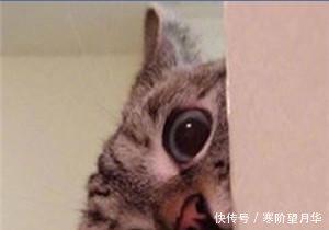 可爱卖萌表情猫咪疼表情包的微信牙走开1!你丑到朕了图片