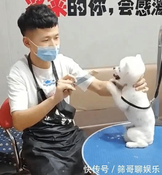 主人送狗去剪毛,中途接到老板电话:快回来吧,你家狗要疯了!