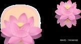 神奇的种子!6颗来自宋朝的古莲子,在丽水成功复活