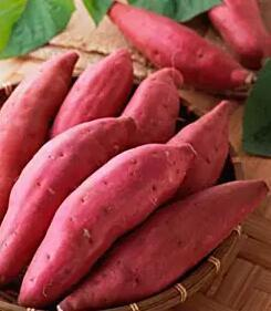 冬季养生:十种素食最适宜进补 - 愚叟 - jhtw1997@126的博客