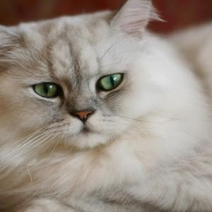 可爱的猫动物图片