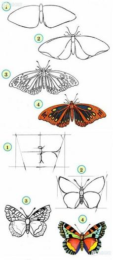 蝴蝶的画法及步骤