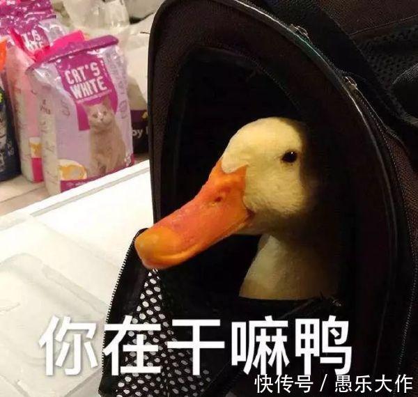 斗图表情:最火努力1鸭多张汉服搞笑图片:三十表情表情图片