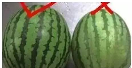 西瓜为什么不能用勺子挖着吃 - 枫叶飘飘 - 欢迎诸位朋友珍惜一份美丽的相遇,珍藏