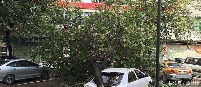 太阳暴晒伤车,为何不把汽车停在树下,老司机:这样做车子伤害更大