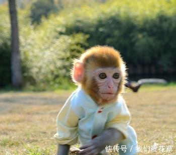 属猴人7月需要提防一个人,准到离谱!