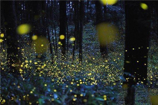 萤火虫为什么会发光?原因让人意想不到!