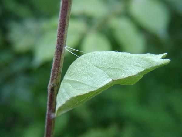 那些昆虫的发育属于变态发育