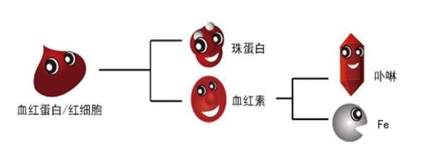 平均血红蛋白浓度