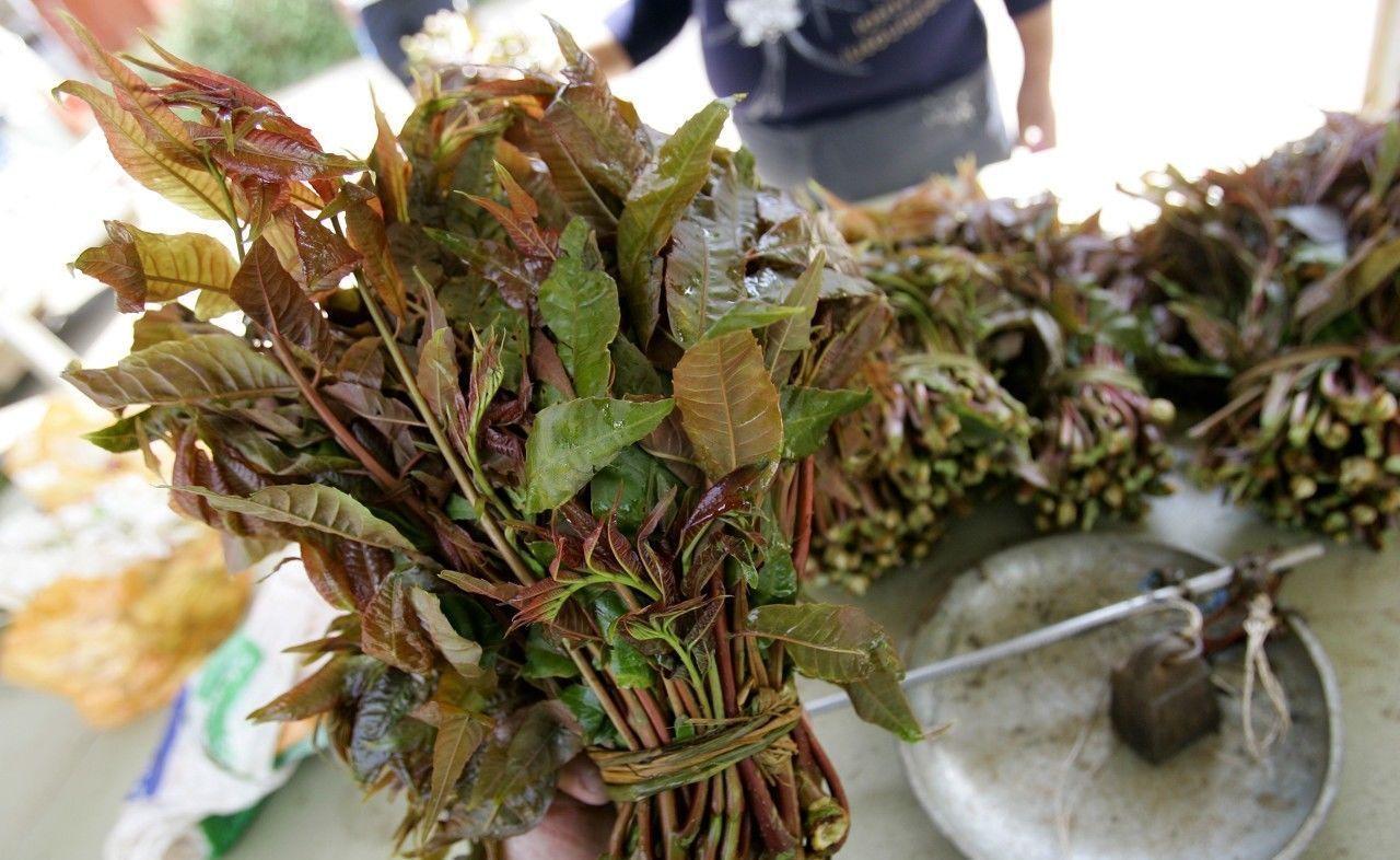 童年纯天然无污染的10种野生国际,回味令人无美食节海南美味会展中心图片