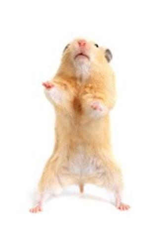 仓鼠生活壁纸_360手机助手