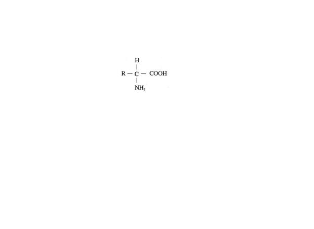 结构问题,氨基酸