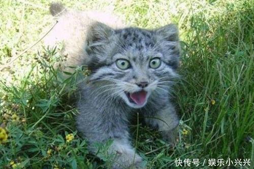 大叔捡到四只小奶猫,养大了之后才发现其异常的行为