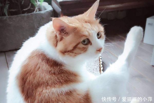 一年四季中,猫咪的身体状况都会有所变化,我们该如何适应和照顾