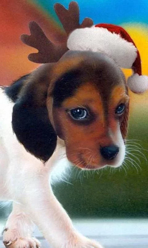 游戏 休闲益智 >美国猎狐犬谜  狗是世界上最迷人和可爱的动物,他们