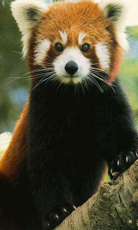 动物的生活壁纸,高清,动态壁纸,壁纸,动态壁纸,野生动物,可爱的动物