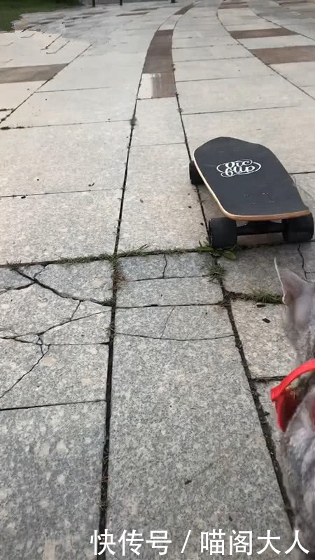 男子将滑板停在猫面前,接下来猫的动作让人笑喷,猫:我也会玩