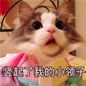 猫咪撒娇表情包4.jpg