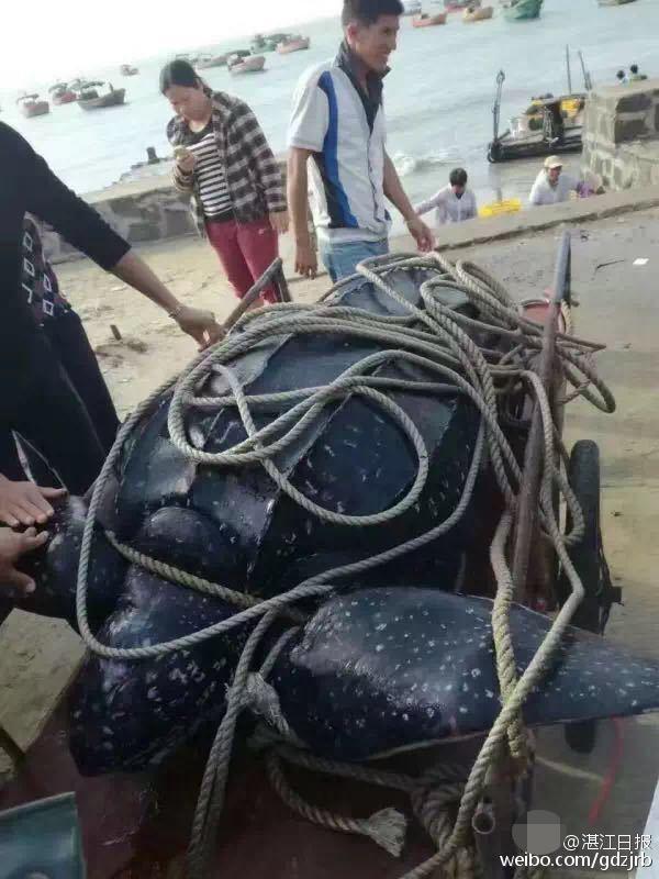 416斤大海龟惨遭屠宰 龟肉被抢购一空 - 梅思特 - 你拥有很多,而我,只有你。。。