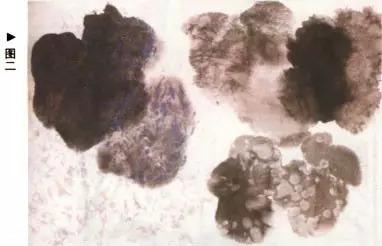 书画百科(七)|水墨葡萄的画法第二课