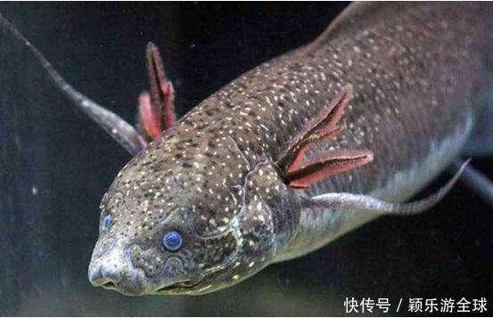 最历害的鱼_除藻能力最强的鱼是哪个
