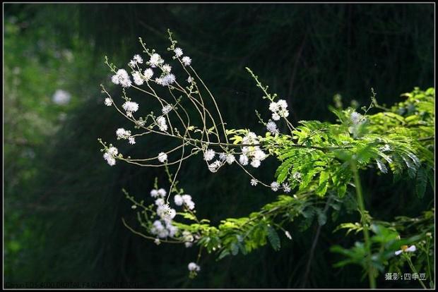请问这种带刺的树是什么树