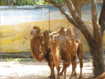 北旭野生动物园